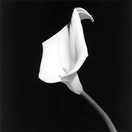 robertmapplethorpe